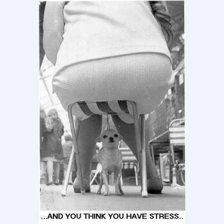 Вот это стресс!