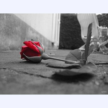 Упавшая роза...